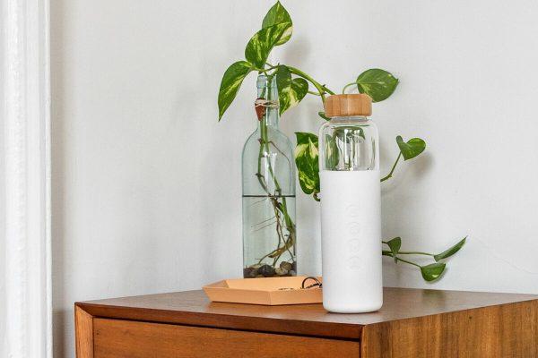 Soma Glass Water Bottle 17oz - White Plant